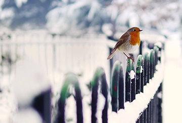 забор в зимнее время