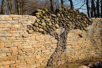 декоративное дерево из каменной стены