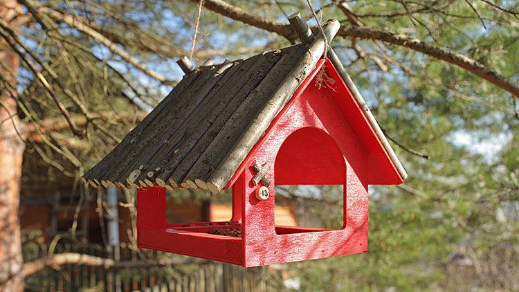 закрытый домик для птиц