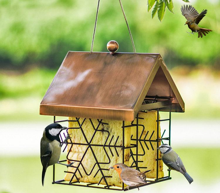 птицы в кормушке