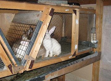 кормушка для кроликов