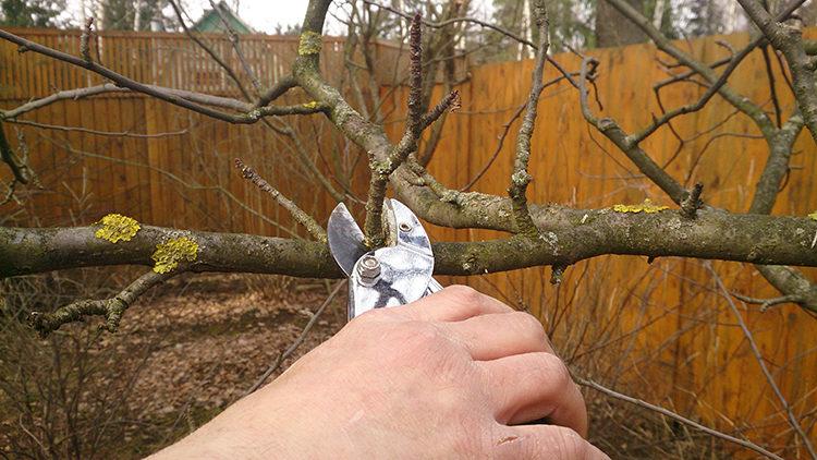проряжение дерева