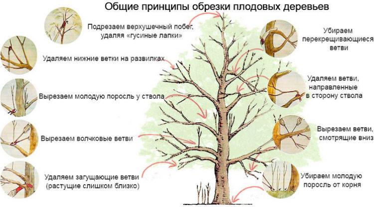 как правильно формировать дерево