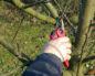 обрезаем деревья