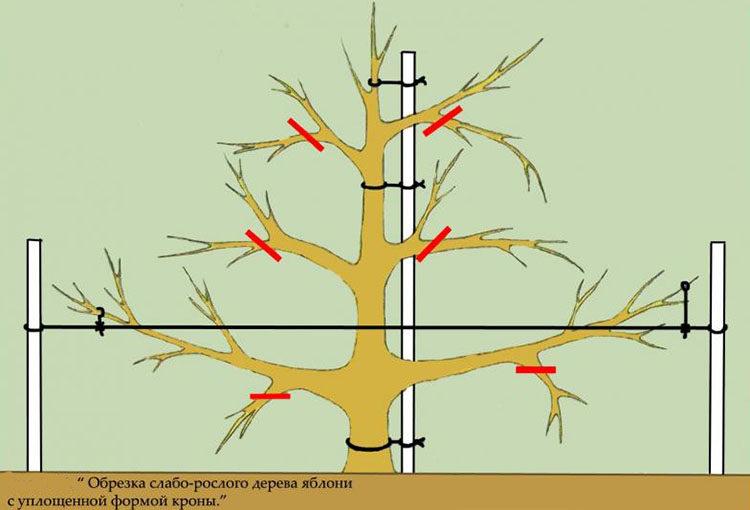 низкорослое дерево