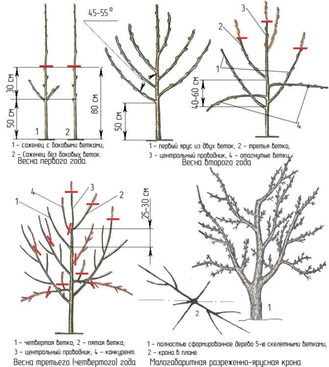 обрезка яблочных деревьев